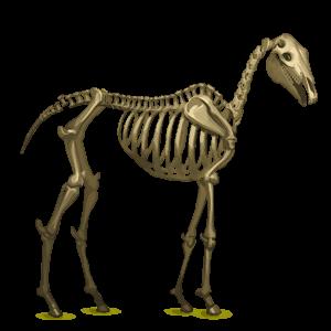 winged unicorn skeleton